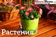 Что мы знаем о растениях - знаках цветочного гороскопа? Омела.